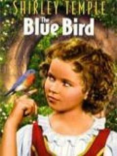蓝色知更鸟普通话版