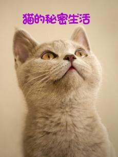 猫的秘密生活