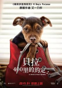 一条狗的回家路(普通话)
