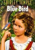 蓝色知更鸟国语版